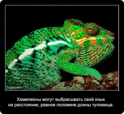 Интересные факты о животных 51413