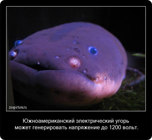 Интересные факты о животных 74845