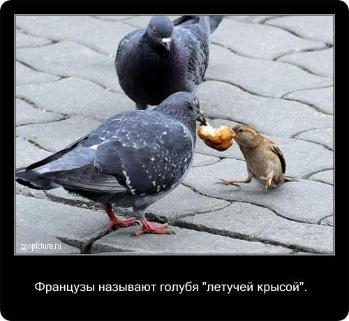 Интересные факты о животных 34650