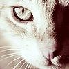 http://www.zoopicture.ru/wp-content/uploads/2009/02/catavatar059.jpg