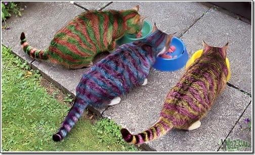 Красить кошек в безумные цвета - новомодное развлечение для богатых и...