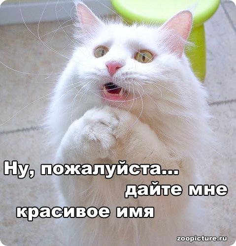 Клички кошек и котов