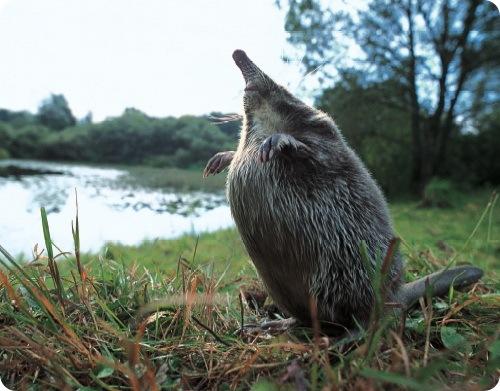 Названия этих животных из кроссвордов знают многие ( 20 фото.