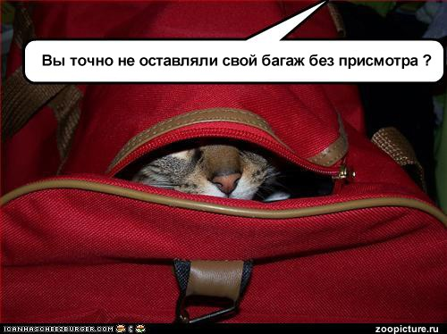 http://www.zoopicture.ru/wp-content/uploads/2009/11/cat_bag_rus.jpg