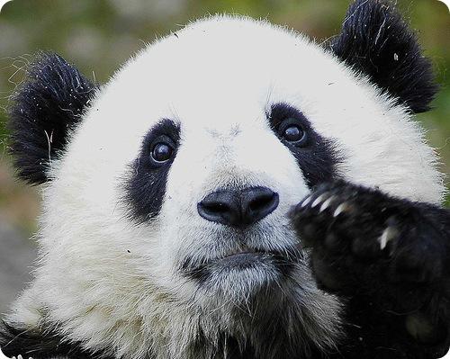 Комментарий: как связать ребенку шапку-панду.