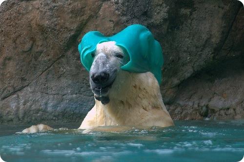 6. Кажется, медведи тоже знают, что такое шапочка для душа.