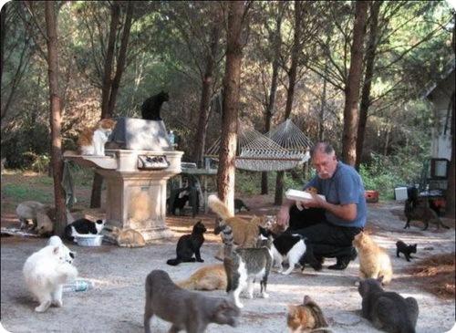 Кошачий рай