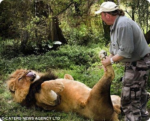 Львиный массажист