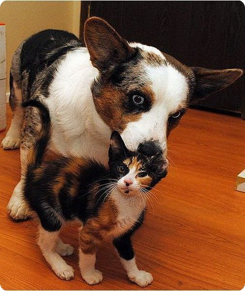 Как кошка с собакой – Подборка 11