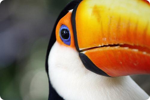 Красивые фотографии животных удачно снятые фотографами-анималистами.