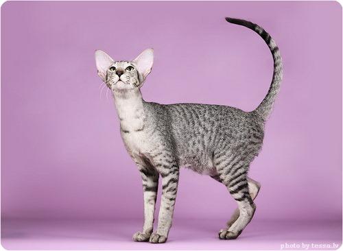 ...необыкновеной коты и кошки...второй день хожу и балдею от них. все...