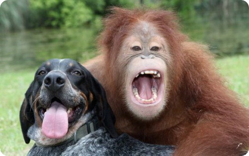 http://www.zoopicture.ru/wp-content/uploads/2011/07/dog_and_the_oranguta_03.jpg