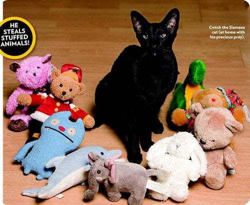 Коты-воришки: Свитч