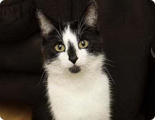 Коты-воришки: Генри