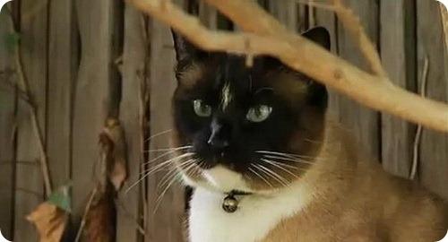 Коты-воришки: Дасти