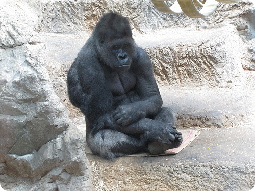 В зоопарке Баффало подавлено восстание обезьян