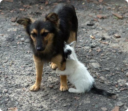 Как кошка с собакой - 29